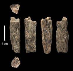 """Dieses Knochenfragment (""""Denisova 11"""") wurde 2012 in der Denisova-Höhle in Russland von russischen Archäologen entdeckt und gehörte der Tochter einer Neandertaler-Mutter und eines Denisovaner-Vaters. Foto: T. Higham, University of Oxford"""