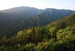 Subtropische Wälder wie dieser in Ost-China (Schutzgebiet Gutianshan) sind besonders artenreich. Bild: Sabine Both
