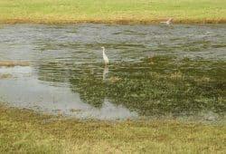 Wenn mal Wasser da ist, freuen sich auch die Graureiher. Foto: Ralf Julke