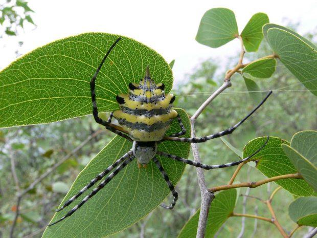 Spinnen und andere Tiere haben wichtige Funktionen in Wäldern. Bild: Jula Zimmermann