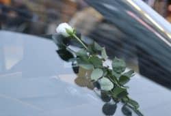 Weiße Rosen bei der AfD - die Geschwister Scholl werden für einen Kampf missbraucht, den sie, wie wohl auch Daniel H., ganz anders gesehen hätten. Foto: Michael Freitag