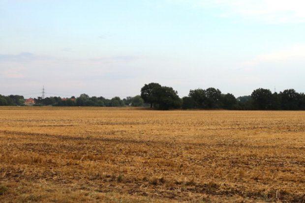 Abgeerntetes Feld bei Wiederau. Foto: Michael Freitag