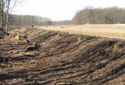 Baumfällungen hinter den Leipziger Auwalddeichen 2011. Foto: Ökolöwe Leipzig