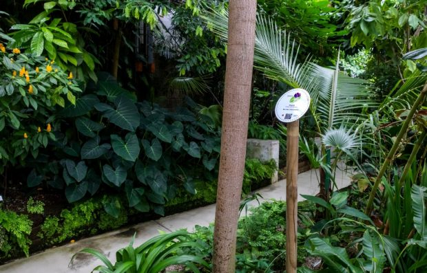 Blick auf den Liebespfad im Botanischen Garten. Foto: Swen Reichhold/ Universität Leipzig