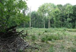 Femelloch im Waldgebiet Die Nonne. Foto: Ralf Julke