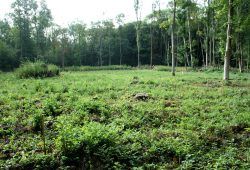 Femelloch im Waldgebiet Nonne. Foto: Ralf Julke