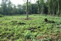 Freigeschlagenes Femelloch im Waldgebiet Nonne. Foto: Ralf Julke