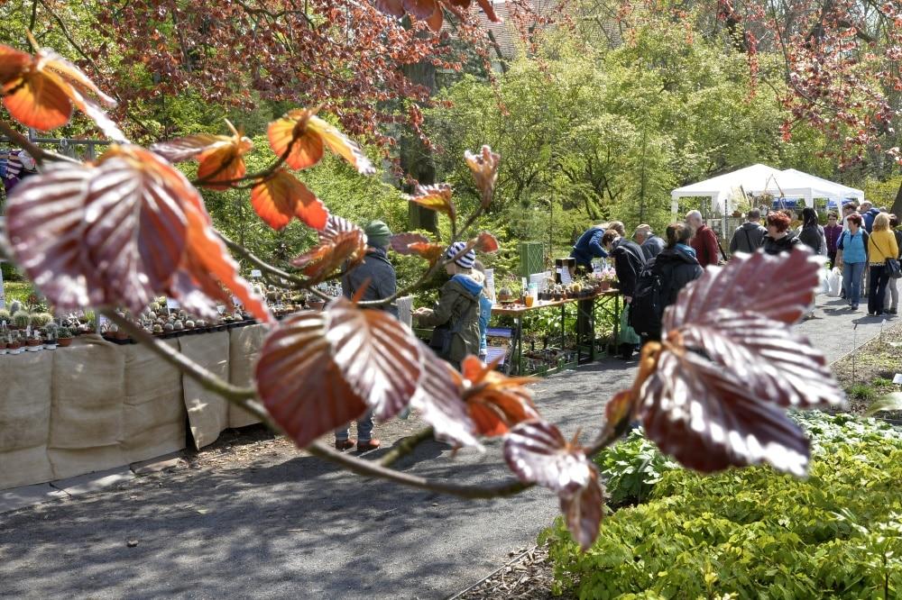 Pflanzenmarkt im Botanischen Garten. Foto: Volkmar Heinz