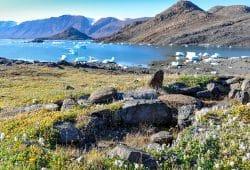 Die Pflanzengemeinschaft in der arktischen Tundra ist in den letzten dreißig Jahren höher geworden. Bild: Anne Bjorkman