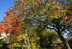 Blattfärbung im Botanischen Garten, Foto: Botanischer Garten