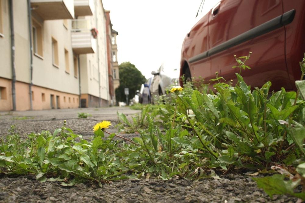 Wie stehts um die Nutzung von Pestiziden in Sachsen? Foto: Ralf Julke