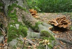 Im Leipziger Auenwald. Foto: Ralf Julke