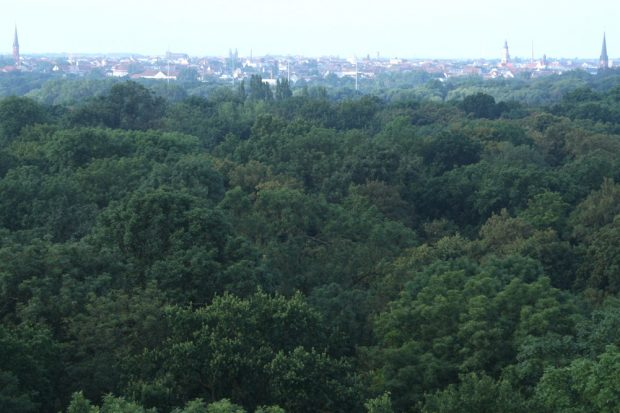 Blick über den Leipziger Auenwald. Foto: Ralf Julke