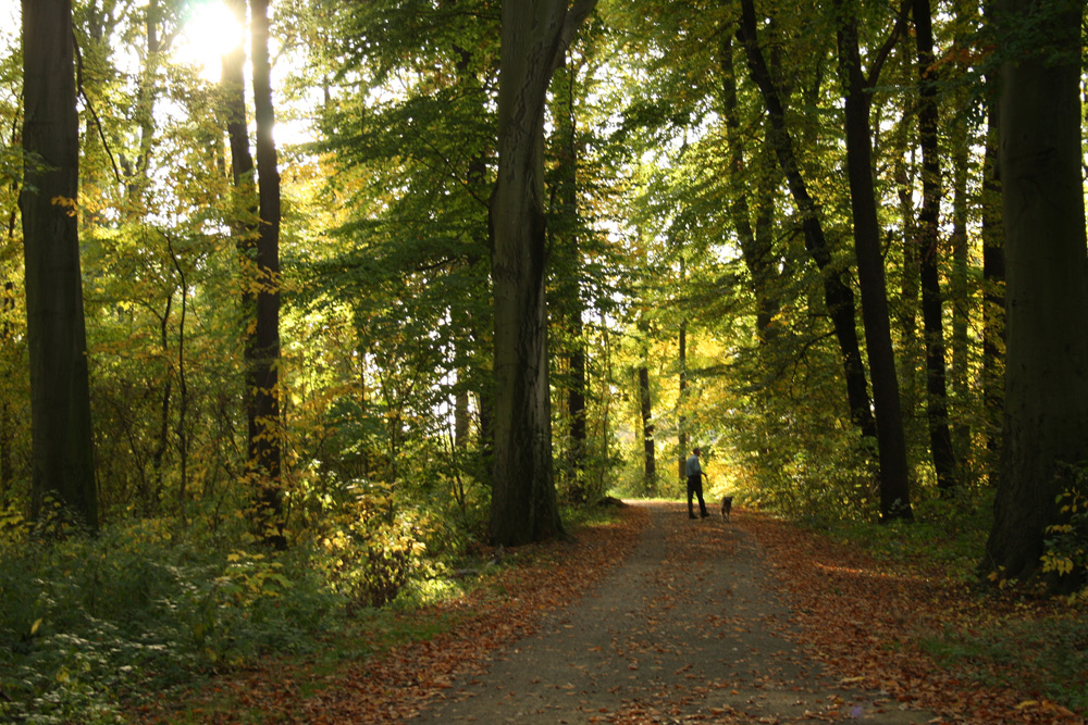 Spaziergang im Auwald. Foto: Ralf Julke