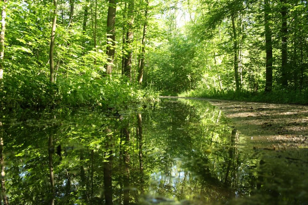 Auwald nach einem Frühjahrshochwasser. Foto: Ralf Julke