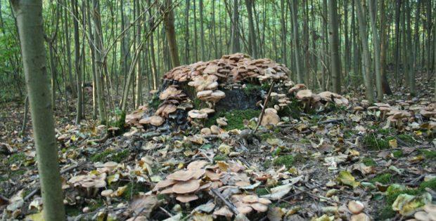 Pilzberg in zugewachsener Waldlichtung. Foto: Ralf Julke