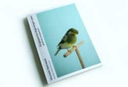 Michelle Steinbeck: Eingesperrte Vögel singen mehr. Foto: Ralf Julke