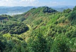 Die Untersuchungsflächen des Experiments BEF-China liegen in einem Berggebiet 400 Kilometer westlich von Shanghai. Bild: UZH