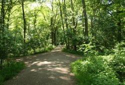 Trockene Wege im Auenwald. Foto: Ralf Julke