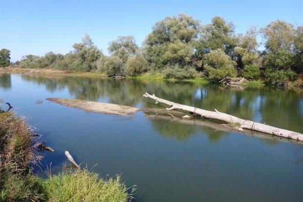 Um den Strukturreichtum der Mulde weiter zu erhöhen, werden sechs Raubäume in den Fluss eingebracht. Foto: Christiane Schulz-Zunkel, UFZ