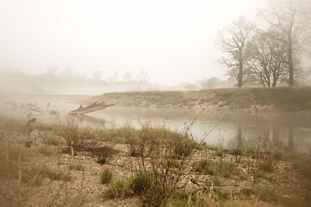 Die Mulde mit ihren angrenzenden Lebensräumen ist einem ständigen Wandel unterworfen. Diese Dynamik bestimmt den Grad der Natürlichkeit. AFoto: Nele Klimmer/WWF