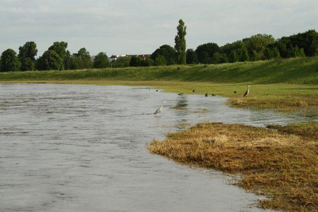 Überschwemmung an der Neuen Luppe. Foto: Ralf Julke