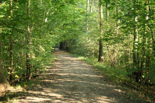 Waldweg im Streitholz. Foto: Ralf Julke