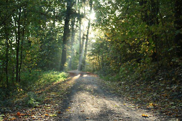 Waldweg im Auenwald. Foto: Ralf Julke