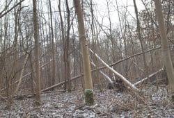 Bruchholz im Winter 2017 / 2018 im Leipziger Auenwald. Foto: Marko Hofmann