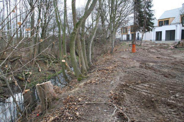 Abgeholzt und von Baufahrzeugen zerfahren: Gewässerrandstreifen an der Alten Luppe. Foto: Ralf Julke