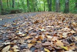 Waldweg, noch mit Waldesgrün. Foto: Marko Hofmann