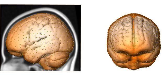 Anhand von hunderten Messpunkten haben die Forscher die Gestalt des Gehirnschädels erfasst und diese zwischen Neandertalern und modernen Menschen verglichen. Grafik: Philipp Gunz