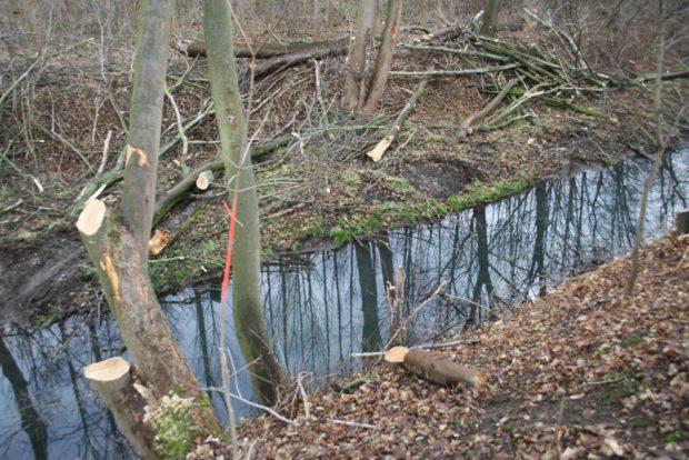 Sicherheitsfällungen ins Rutschen gekommener Bäume an der Uferböschung der Alten Luppe. Foto: Ralf Julke