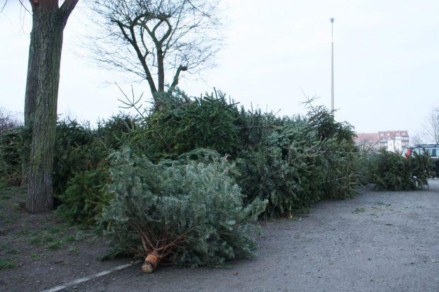 Das übliche Ende der Weihnachtsbäume ... Foto: Ralf Julke