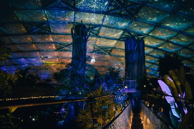 Magisches Tropenleuchten läßt Gondwanaland erstahlen © Zoo Leipzig
