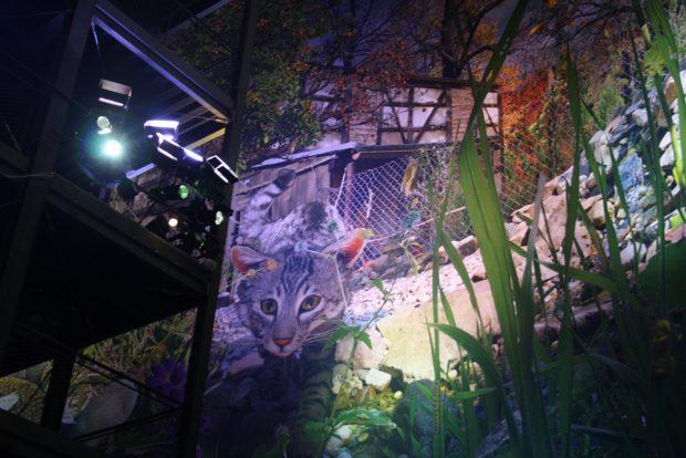 Die Katze darf im Paradies nicht fehlen. Foto: Ralf Julke