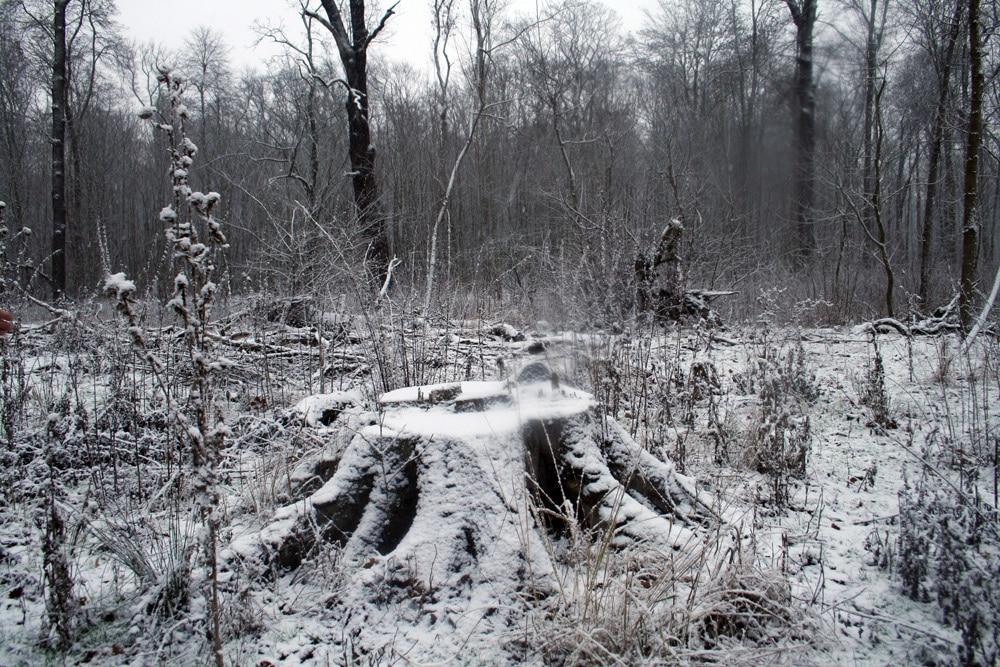 Der Auenwald als Altbaumlieferant. Foto: Ralf Julke