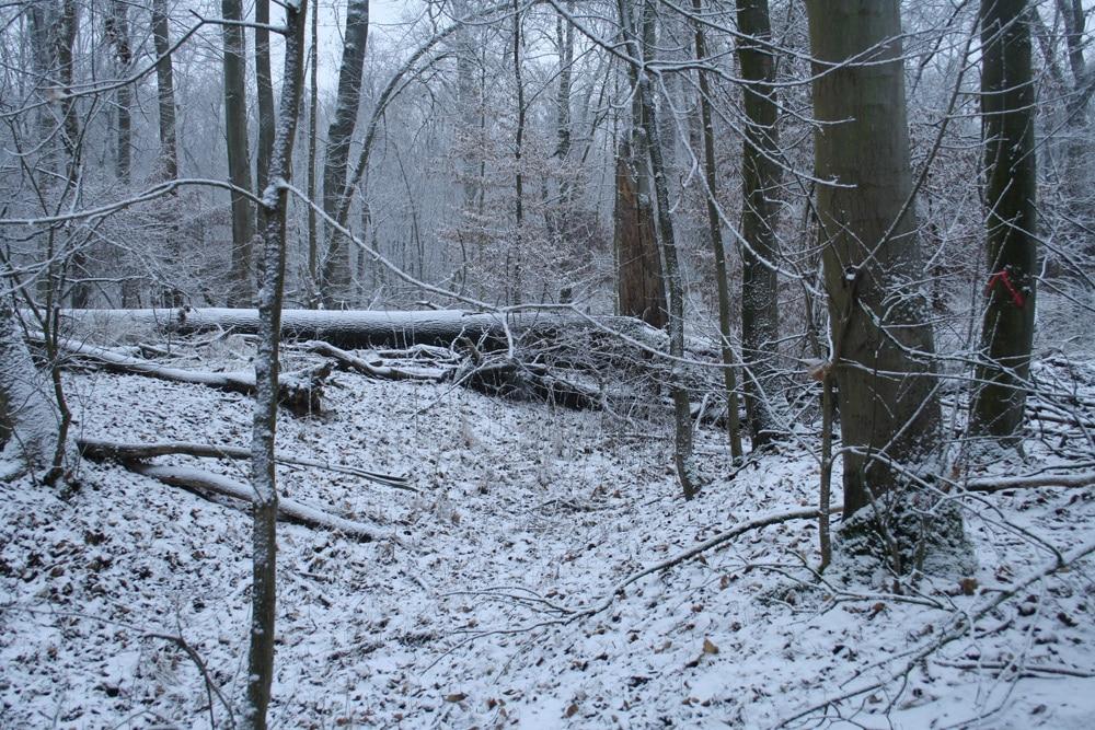 Burgaue im Winter. Foto: Ralf Julke