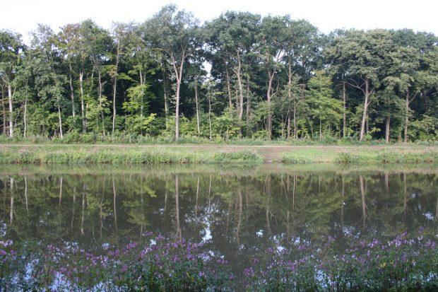 Freigeschlagene Waldkante am Elsterflutbett 2013. Foto: Ralf Julke