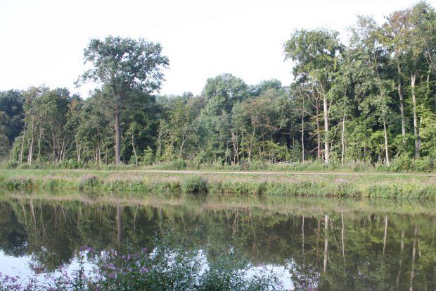 Auch an Nonne wurden wertvolle Alt- und Biotop-Bäume von der Landestalsperrenverwaltung gefällt - an einem Deichverteidigungsweg, der nichts verteidigt. Foto: Ralf Julke