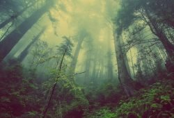 Regenwaldstimmung. Foto: pixabay_forest-931706_960_720