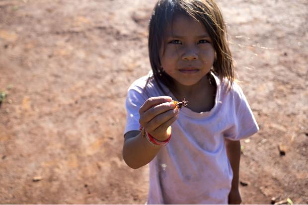 Das Leid unter den Guaraní-Kaiowá ist groß. Manche Kinder müssen sich von Insekten ernähren. Quelle: BUND Leipzig
