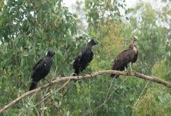 Artenreiche Vogelwelt in der ursprünglichen Heimat des Kaffees. Foto: Dr. Fabian Haas