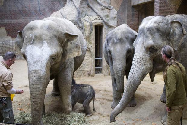 Unter der Aufsicht der Pfleger sind die Tanten beim Trinken dabei © Zoo Leipzig
