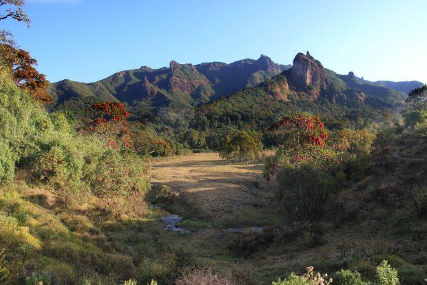 Ein Beispiel für ein Gebiet mit besonders hoher Variation an Waldtypen – und entsprechend hoher regionaler Artenvielfalt – ist das bergige Waldgebiet Harenna in Äthiopien. Foto: Laica ac from UK, CC BY-SA 0.2
