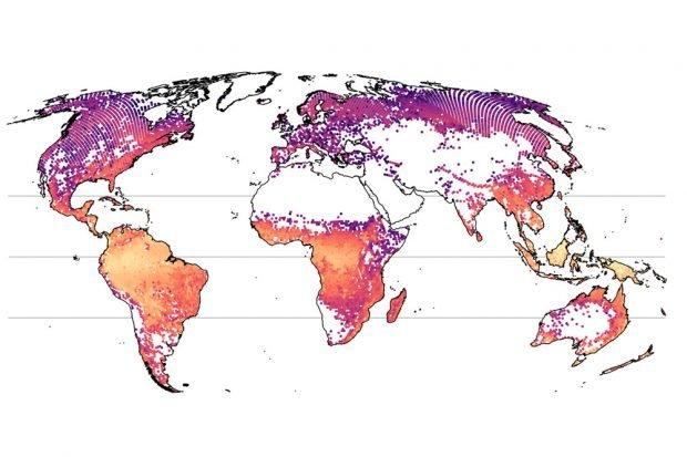 Die erste weltweite Karte der Baumarten-Vielfalt, erstellt mithilfe des neuen Modells. Foto: Petr Keil und Jonathan Chase