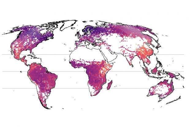 Betrachtet man die Baumarten-Vielfalt auf der Skala größerer Regionen, ergibt sich ein anderes Bild. Eine besonders hohe Anzahl an Arten (orange bis gelb) wird nun in Bergregionen beobachtet, etwa in Süd-China, Mexiko oder dem äthiopischen Hochland – alles Regionen mit hoher Beta-Diversität. Foto: Petr Keil und Jonathan Chase