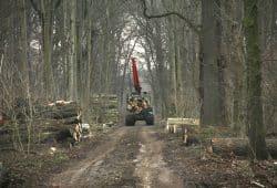 """Schweres Gerät im Waldgebiet """"Der Kanitzsch"""". Foto: NuKLA e.V."""