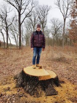 Wolfgang Stoiber auf dem Stumpf einer gefällten Eiche. Foto: NuKLA e.V.