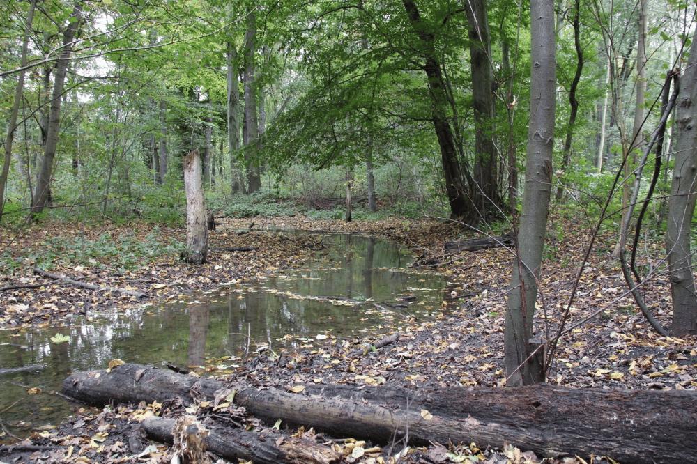 Der Burgauenbach fließt nun seit 20 Jahren. Foto: Dr. Maria Vlaic